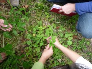 Heilpflanzenfortbildung