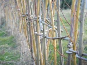 Ein Zaun Aus Weiden Wildpflanzenschule