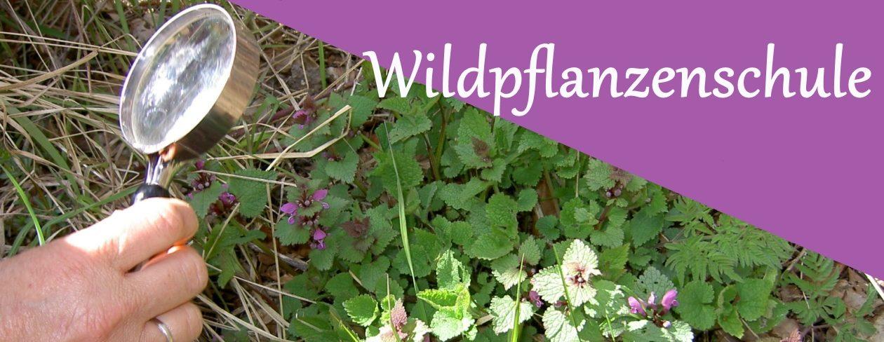 Wildpflanzenschule